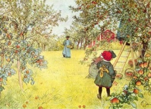 Art APPLE HARVEST by Carl Larsson